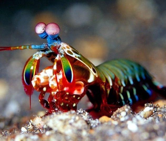 vision crevette marine