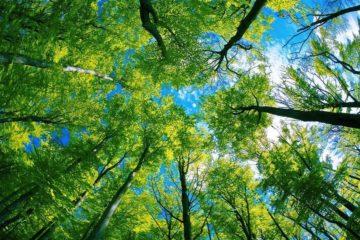 arbres climat
