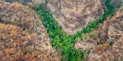 australie feu brousse foret incendie arbres prehistoriques pins wollemi