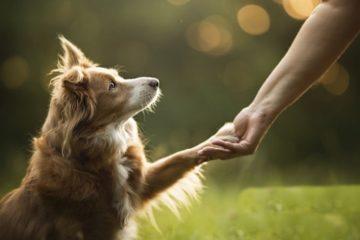 chiens gestes