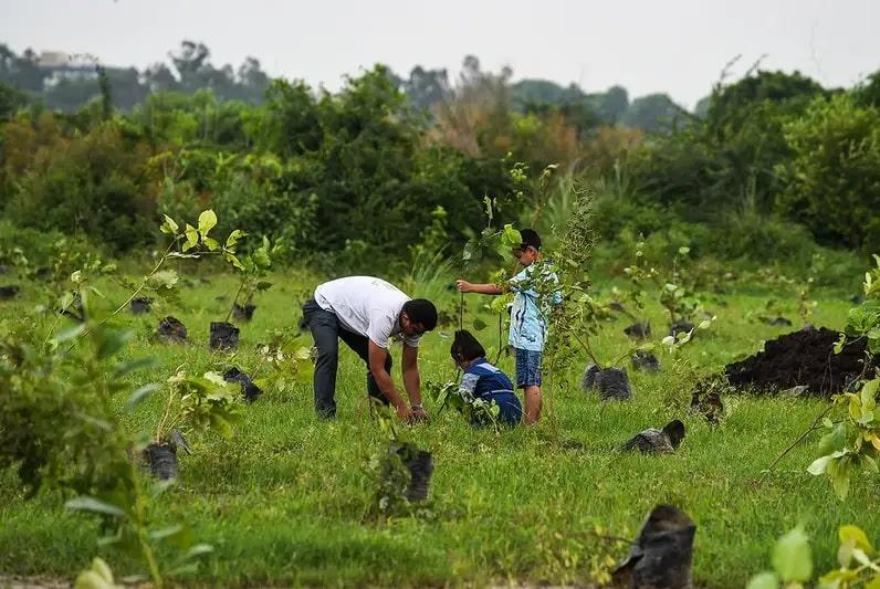 citoyens reforestation