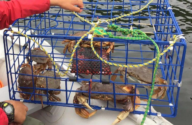 crabe dormeur acidite ocean fonte carapace