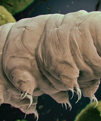faiblesse tardigrade