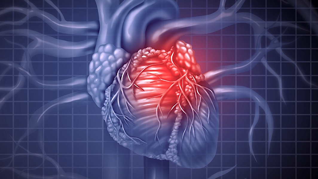 muscles cardiaques cultives laboratoire transplantes premiere fois