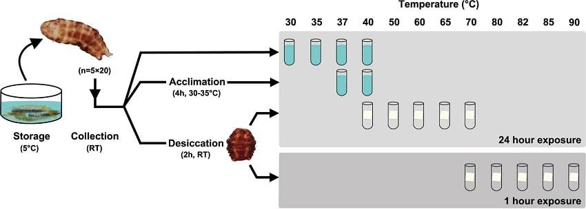 protocole tardigrade