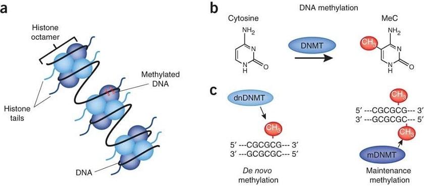 schema methylation
