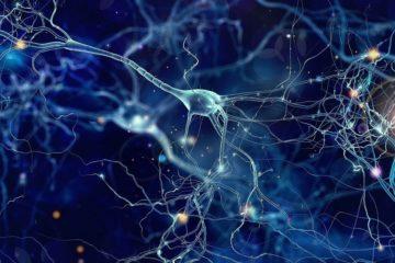 signal neurones