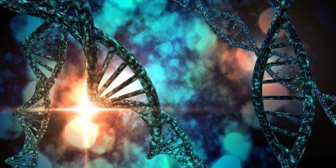 adn reproducteur reproduction genome laboratoire