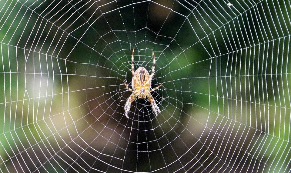 L'Araignée du Prophète - François Coppée Araignees-toile-cognition