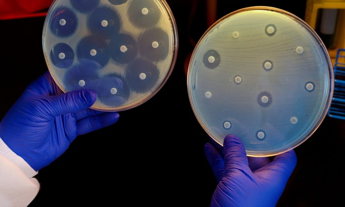 bacterie antibiotique microbes