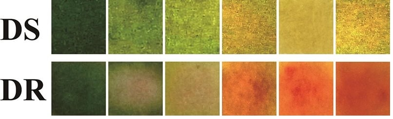 couleurs pansement