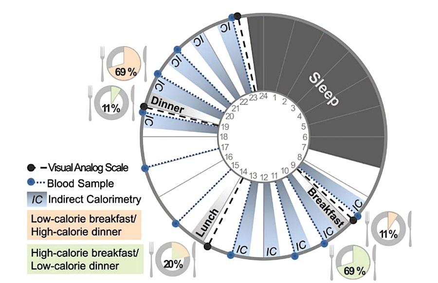 deroulement etude repas copieux matin benefices