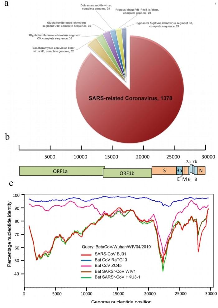 genome 2019ncov