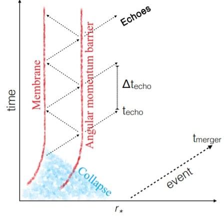 membrane echo