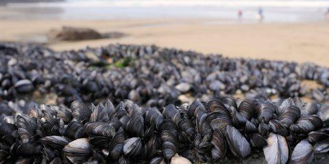 moules plage