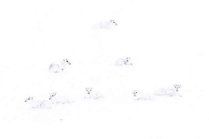 rennes neige