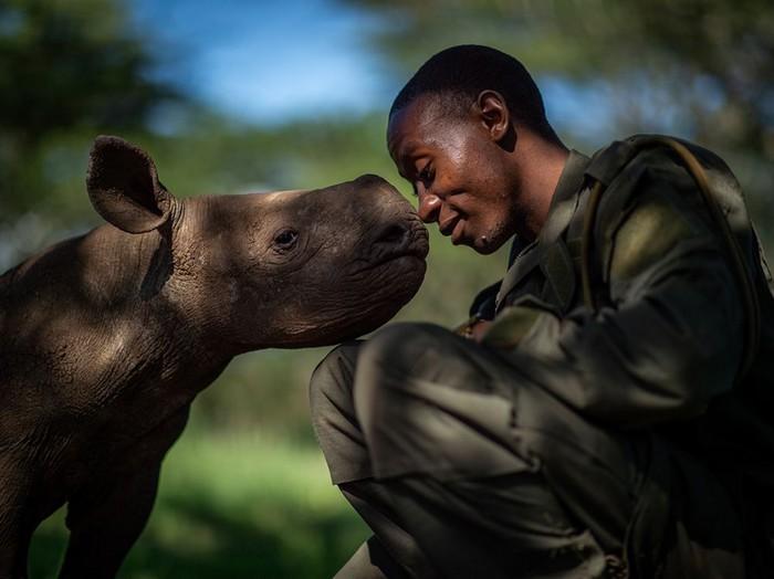 rhinoceros noir
