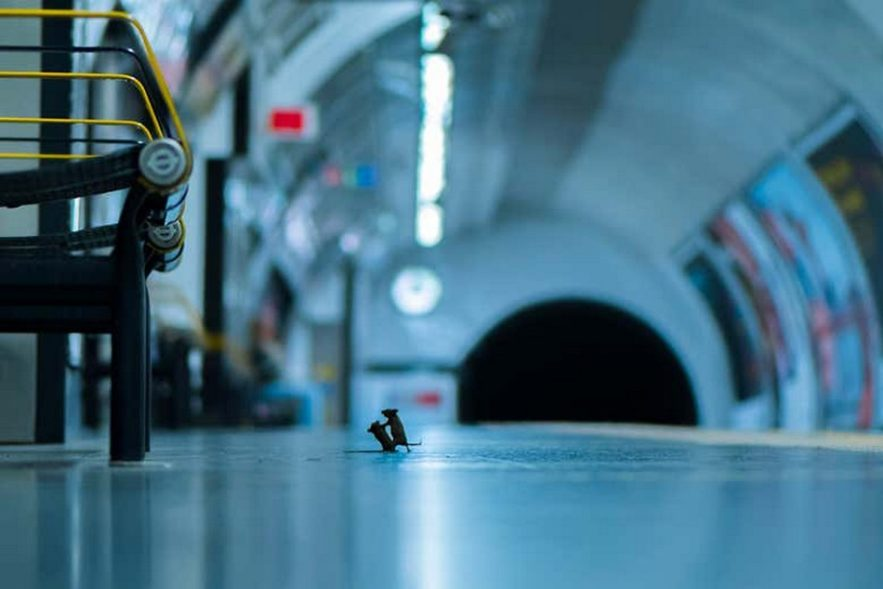 souris quai metro