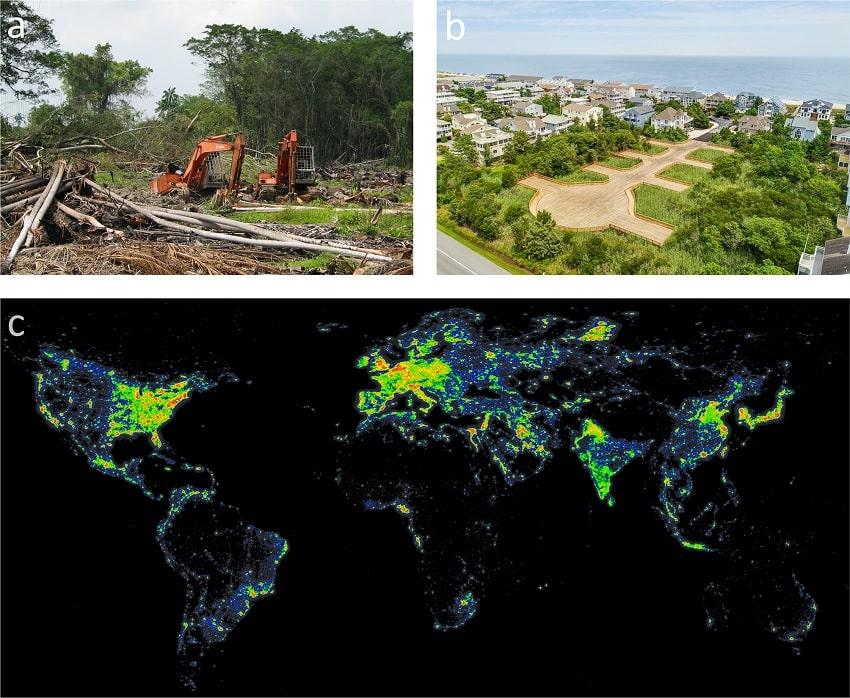 urbanisation lucioles
