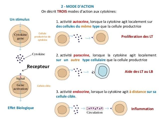 action cytokines