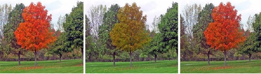 arbre daltonisme