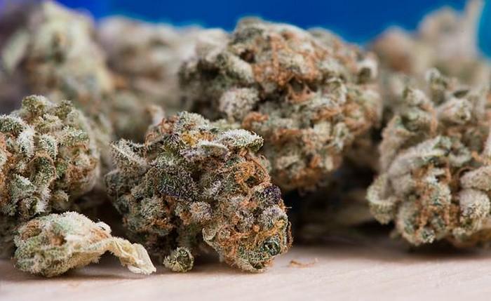 cannabis tete fleur