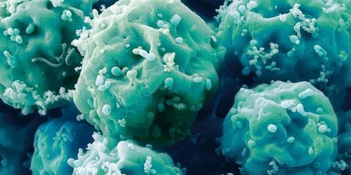 cellule souche embryonaire