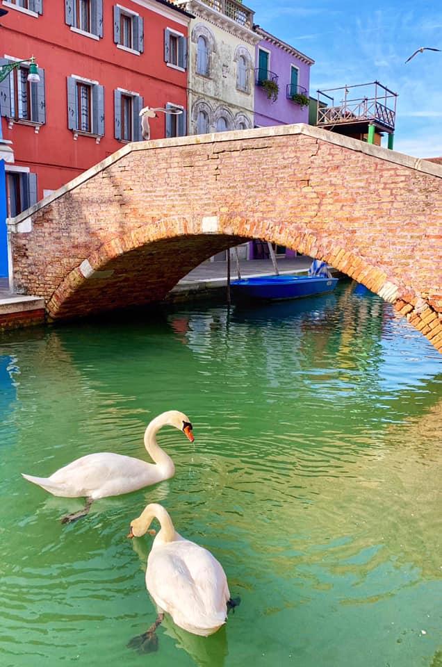 cygnes venise eau propre