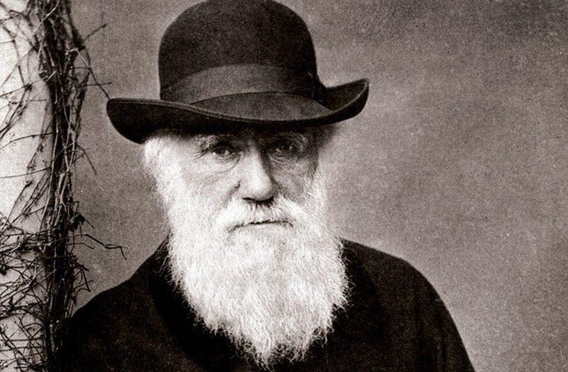 darwin evolution