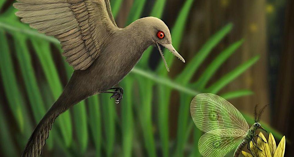 dinosaure plumes cretace oculudentavis khaungraae illustration