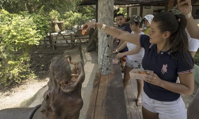 hippopotame escobar colombie