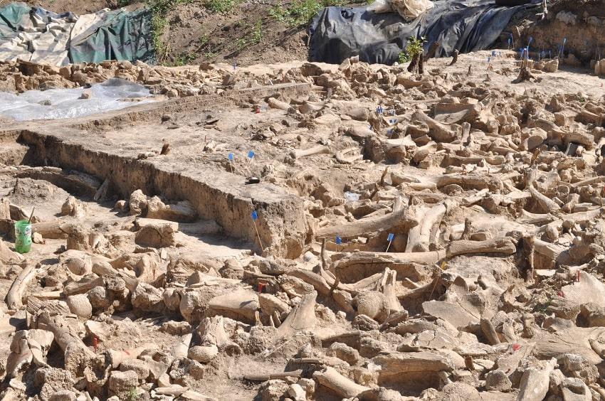 De mystérieuses structures en ossements de mammouths révèlent des informations sur les ères glaciaires ! By Thomas Boisson Ossements-mammouth