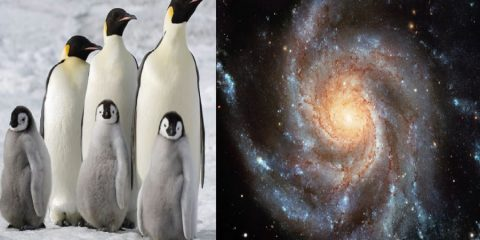 pingouins galaxies