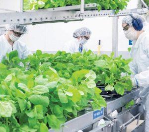 La technologie à base de plantes de Medicago
