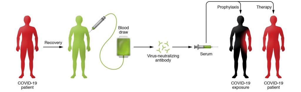 Principe de la thérapie passive par anticorps