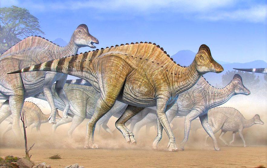 traces adn vieilles 75 millions annees decouvertes dans cartilage dinosaure Hypacrosaurus stebingeri