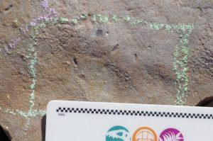 traces fossiles ancêtre bilatériens