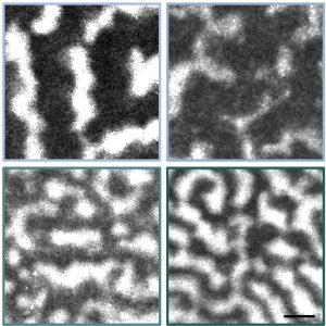 capture ondes surface membrane cellulaire