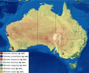 carte découverte araignées-paons australie