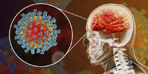 cerveau coronavirus