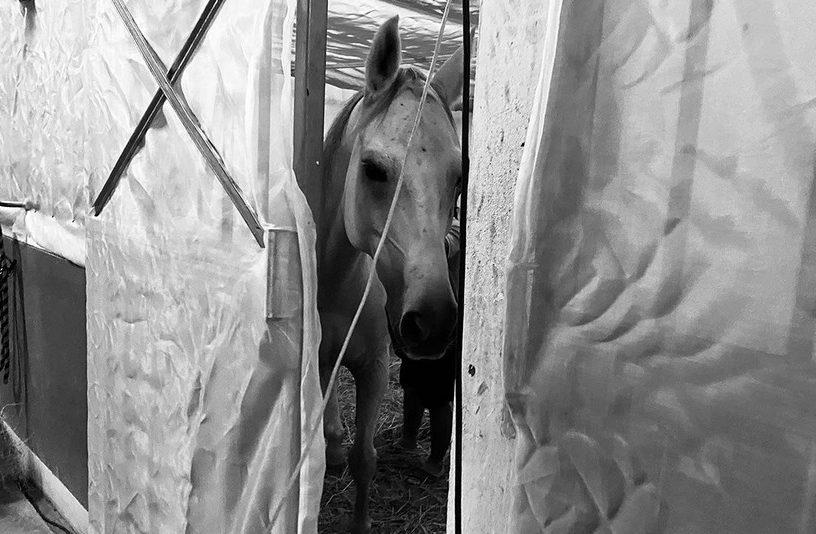 cheval peste equine