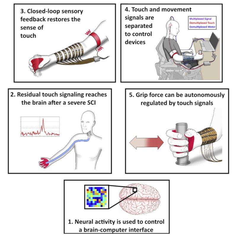 étapes interface cerveau machine fonction motrice et toucher