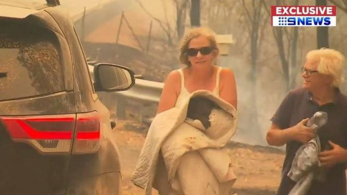 koala australie sauvetage flammes incendie
