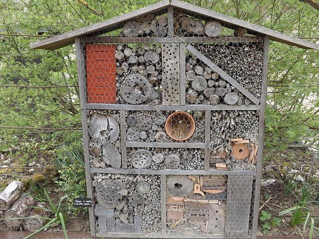 alerte extinction insectes hôtel