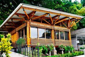 dérivé bambou résistant écologique