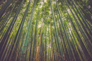 matériau dérivé bambou très résistant