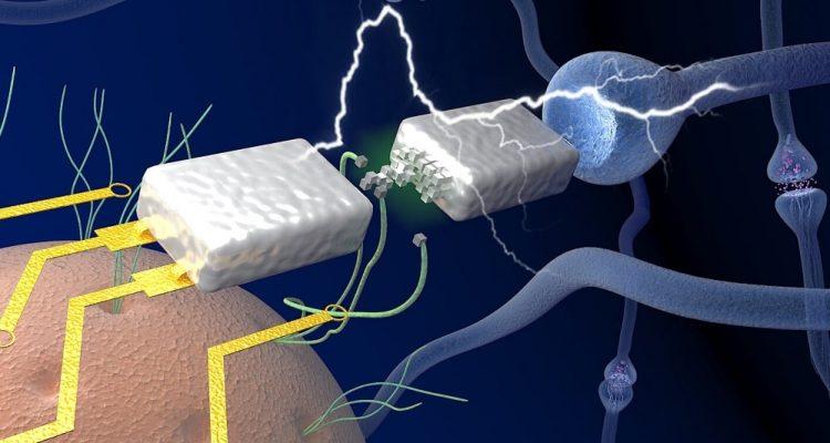 memristor neurones