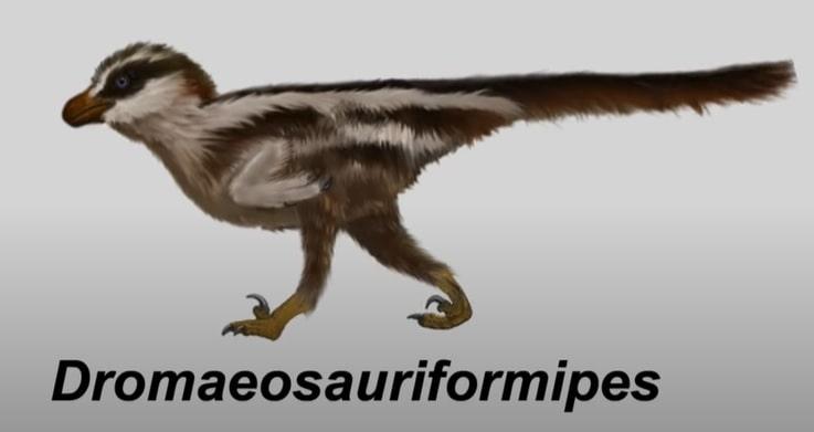 micro raptor