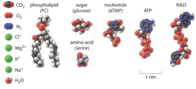 molecules cellule