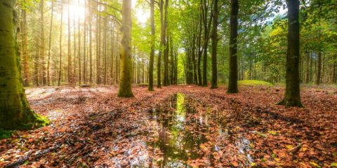 odeur pluie sol bactéries géosmine collemboles